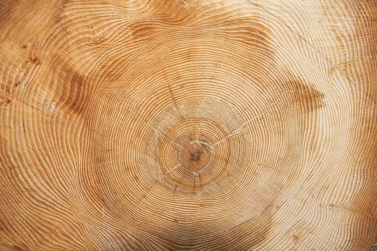 tree-wood-grain--2